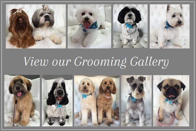 Dog grooming gallery at pooch Dog Spa