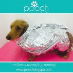 Deep Conditioning treatment at pooch Dog Spa