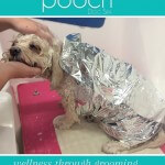 Enjoying a facial and head massage at pooch Dog Spa