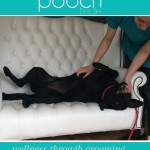 Enjoying belly tickles at pooch Dog Spa