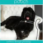 Labradoodle grooming at pooch Dog Spa
