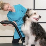 Collie cross grooming