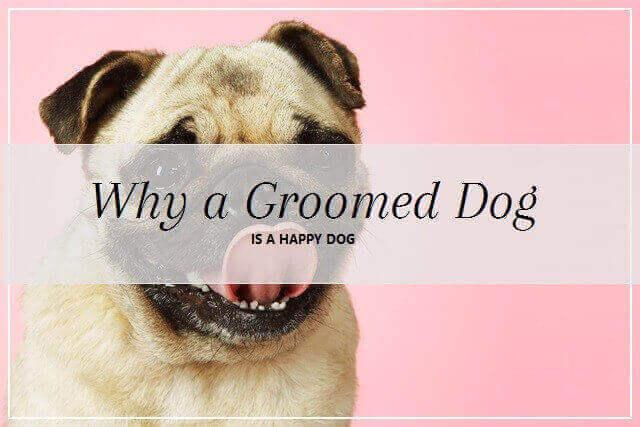 Groomed dog at pooch Dog Spa
