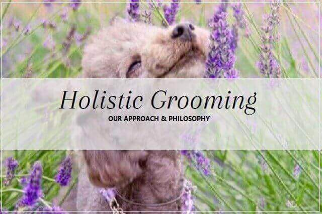 Holistic grooming at pooch Dog Spa
