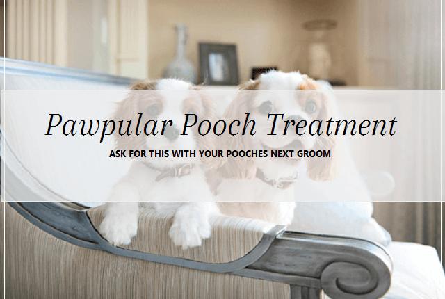 Pawpular pooch Treatment