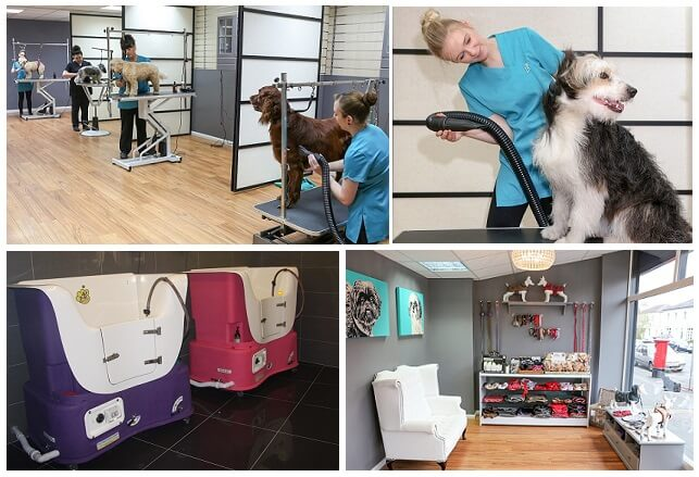 Dog Grooming Courses Hampshire