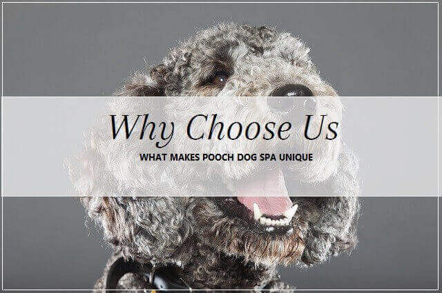 Why choose pooch Dog Spa