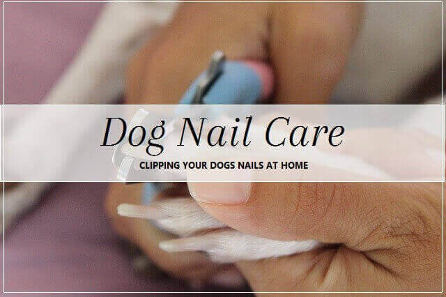 Dog Nail Care at home