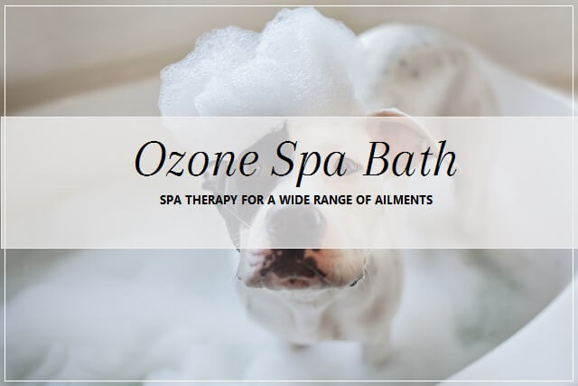Ozone Spa Bath for dogs