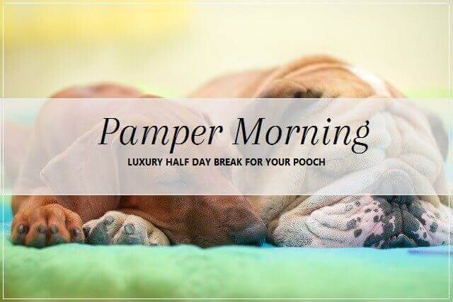 Pamper Morning break for dogs