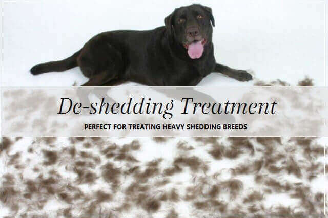 Shedding Dog