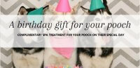 Dog birthday gift