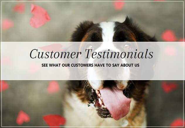 Five star reviews for pooch Dog Spa