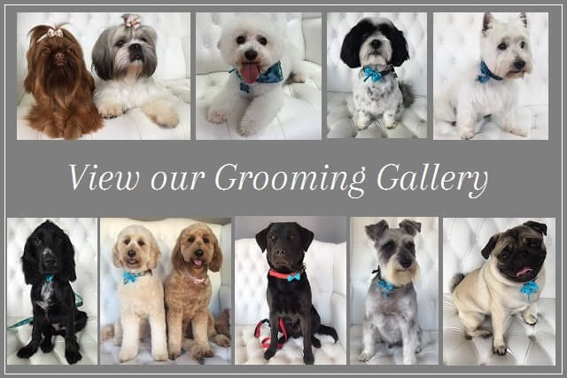 Dog grooming gallery