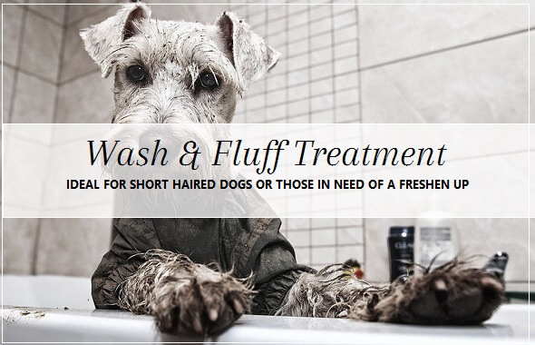 Dog Wash treatment