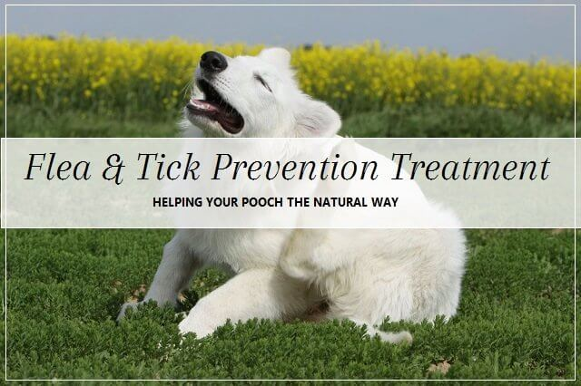 Natural flea and tick prevention
