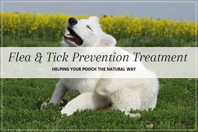 Natural Flea And Tick Prevention For Dogs Uk