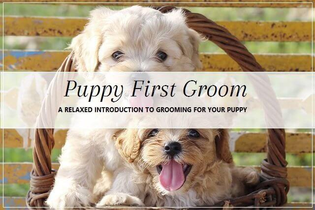 Puppy grooming at pooch Dog Spa