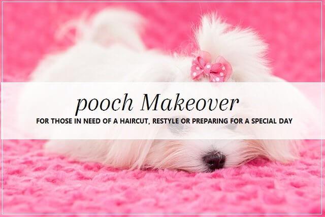 pooch Makeover