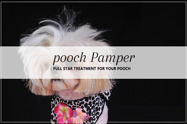 Dog pampering