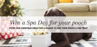 Christmas draw at pooch Dog Spa