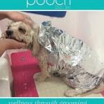 Enjoying a facial and head massage at pooch Dog Spa