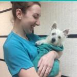Post bath cuddles at pooch Dog Spa