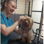 Relaxed ear cleaning at pooch Dog Spa