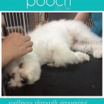 Very relaxed ear plucking at pooch Dog Spa