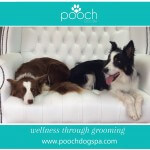 Collie grooming at pooch Dog Spa