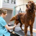Irish Setter grooming at pooch Dog Spa