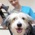 Happy dog at pooch Dog Spa