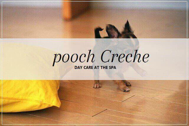 Dog creche services at pooch Dog Spa
