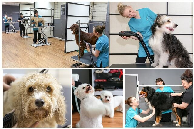 Dog grooming in Ascot