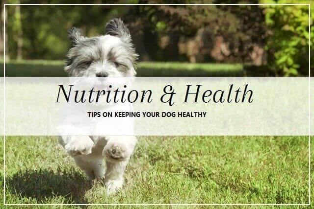 Dog Nutrition and Health