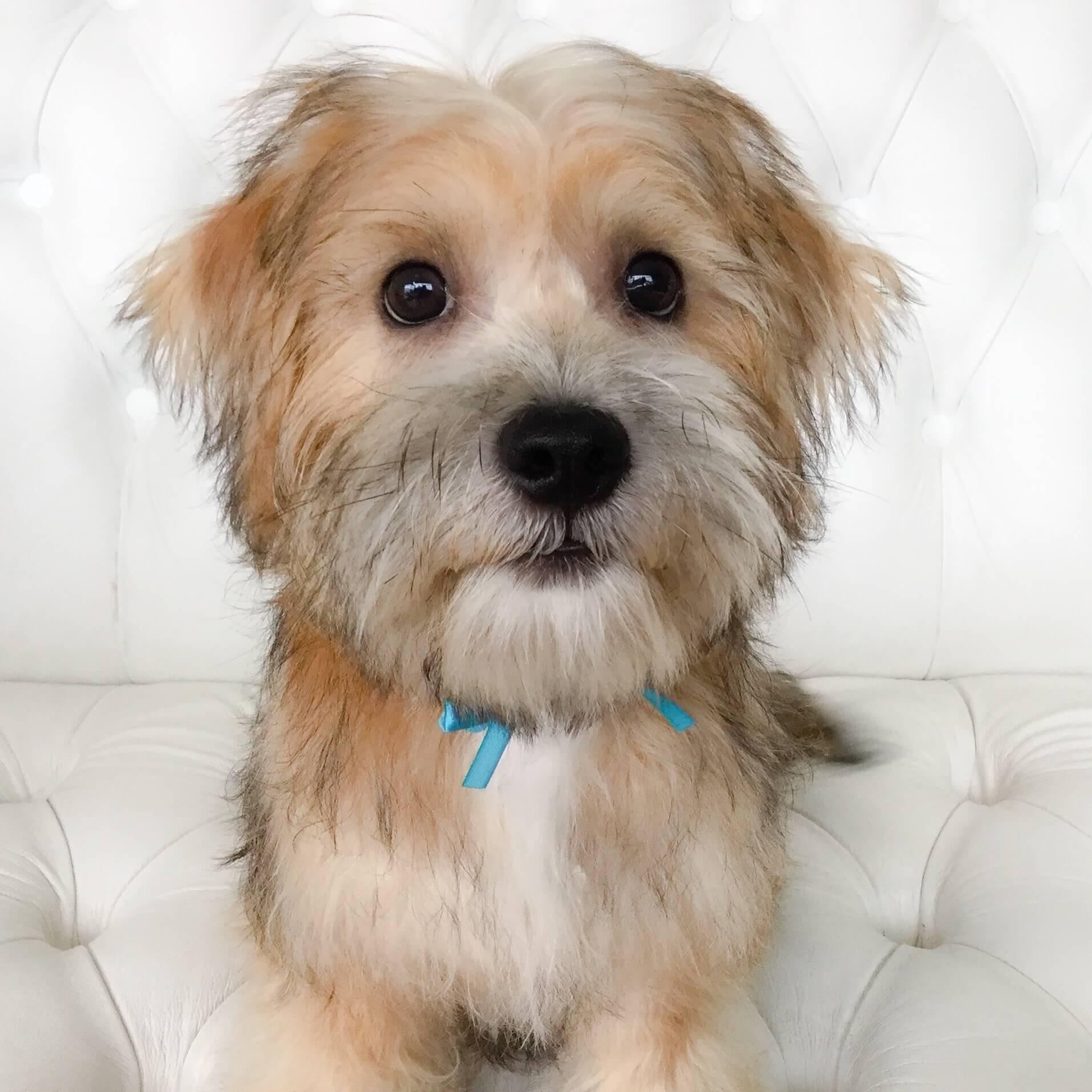 Puppy-grooming.jpeg