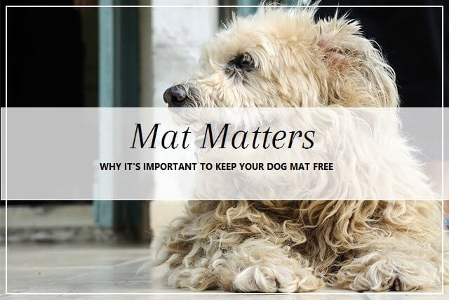 Matted dog