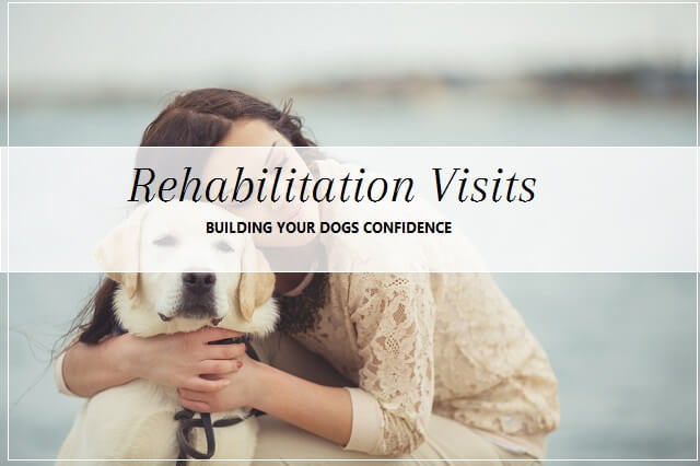 Rehabilitation services at pooch Dog Spa