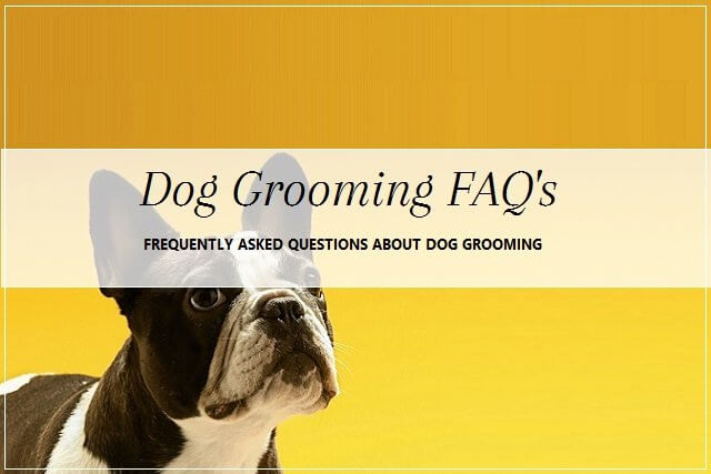 Dog grooming questions